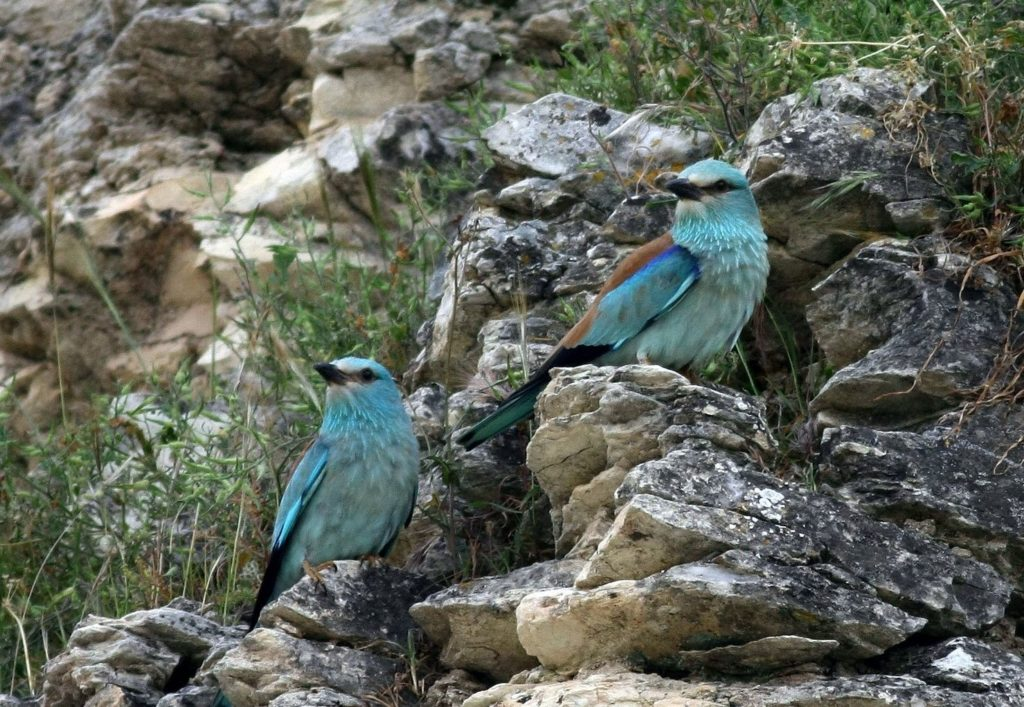 birds north cyprus