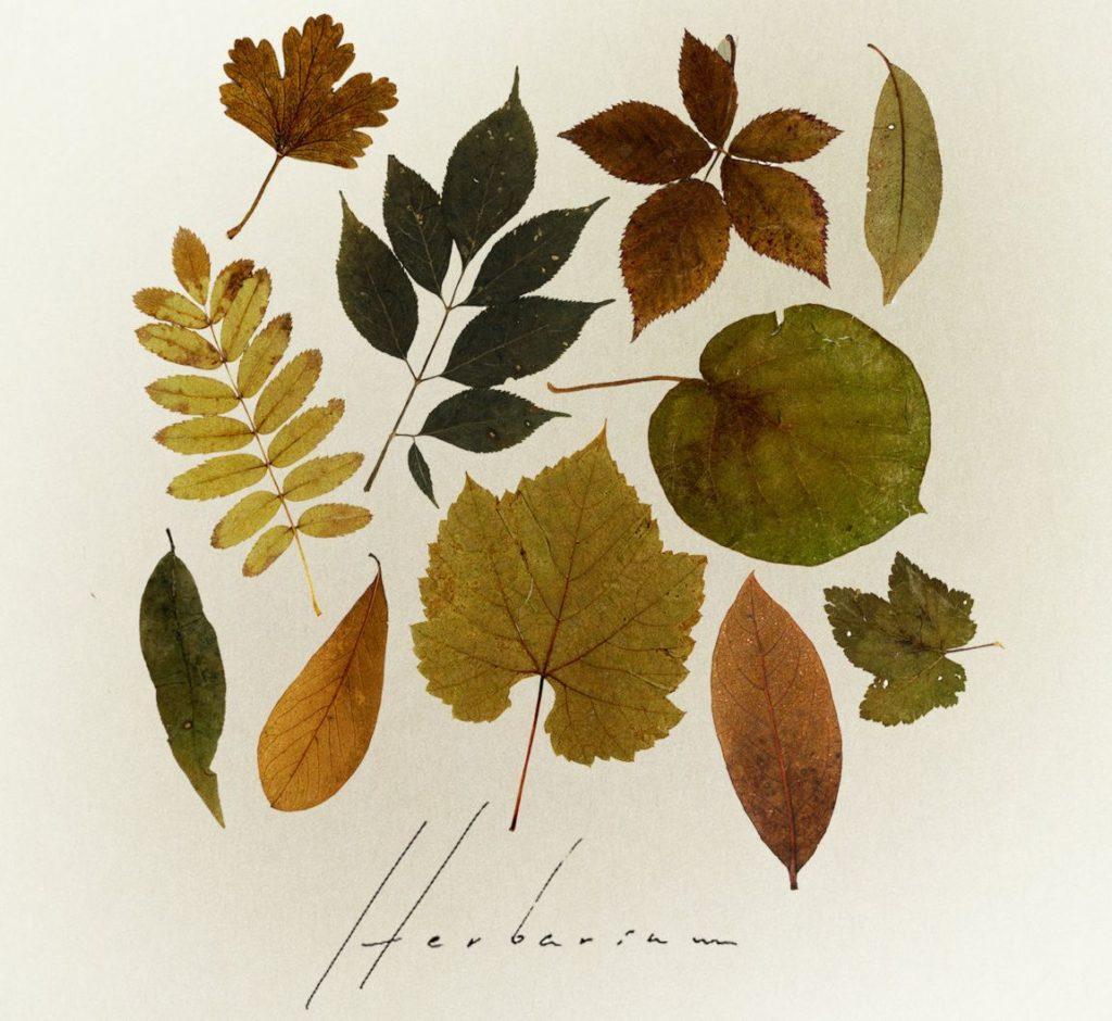 herbarium north cyprus