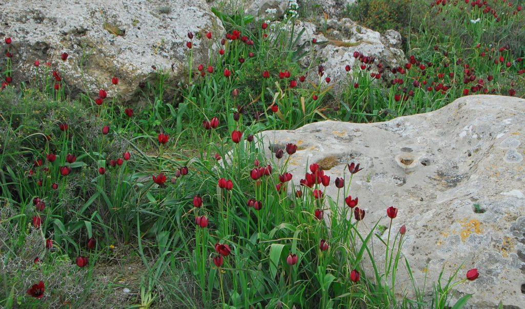 flora north cyprus