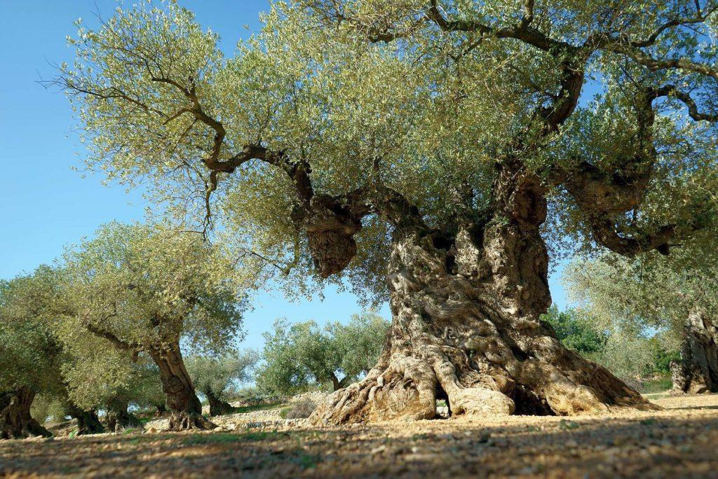 zakad north cyprus